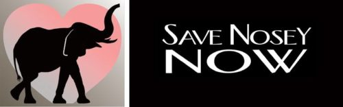 Save Nosey Now logo