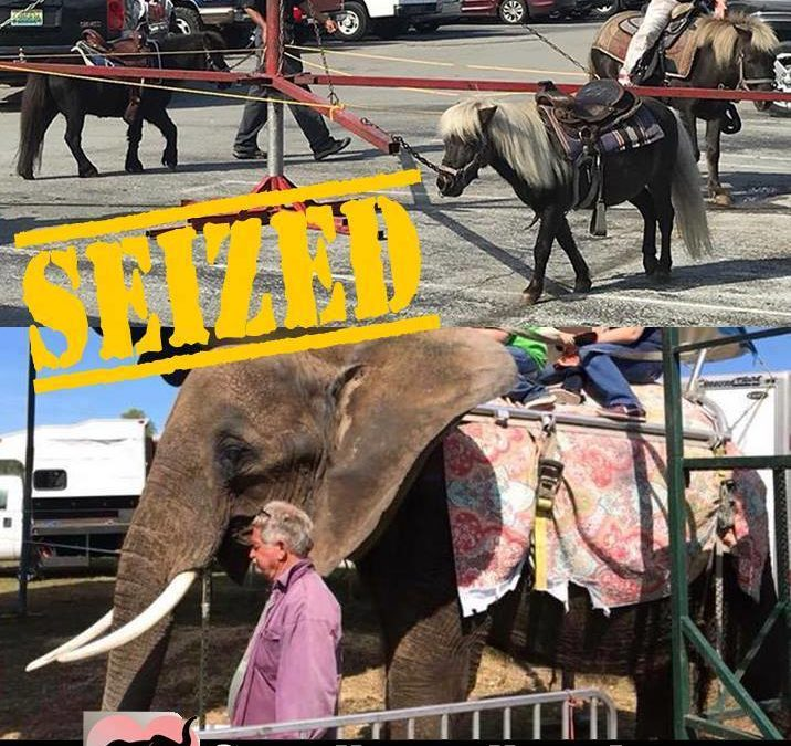 Press Release – Save Nosey Now Inc. Rejoices As Nosey the Elephant is Seized From Her Abusive Owner