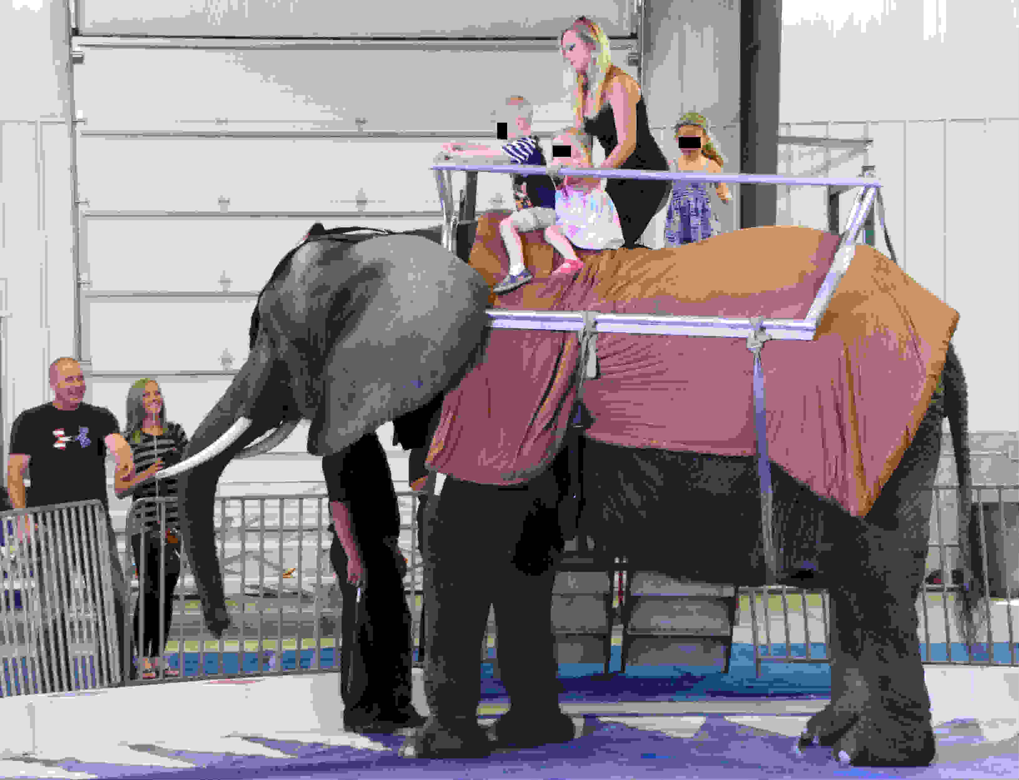 Nosey giving rides, Davenport, Iowa, May 22, 2016 - photo courtesy Kim (Born Torun)