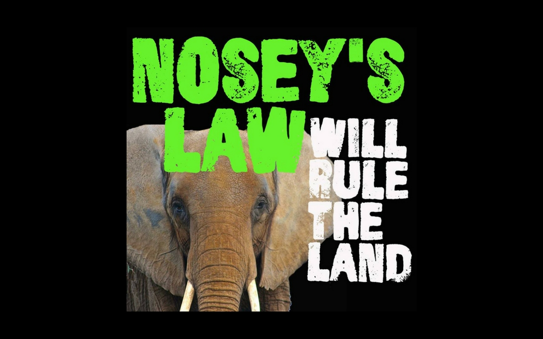 Press Release – Save Nosey Now, Inc. Celebrates New Jersey State Senate Vote to Pass Nosey's Law (A4386/S2508)