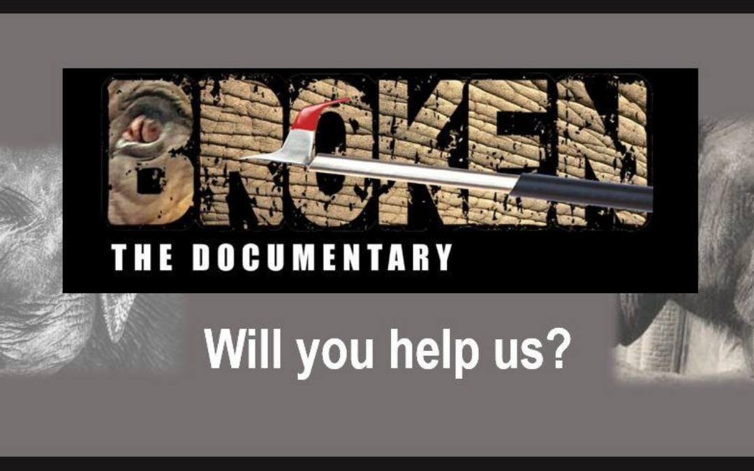 A Catalyst for Change: BROKEN, The Documentary – A Film By SaveNoseyNow.org